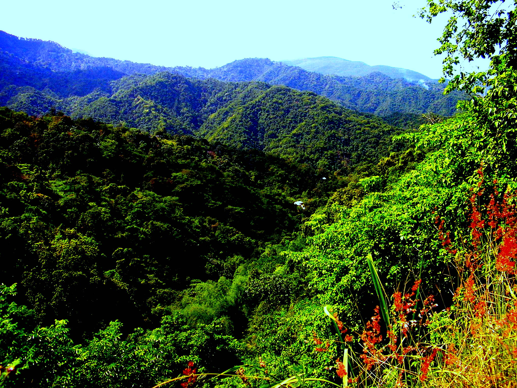 Image result for beauty of nature in jamaica