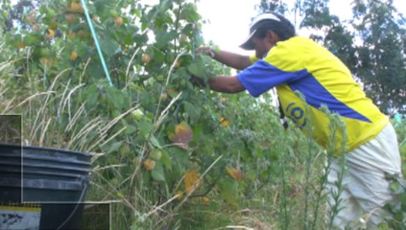 ecuador eliminates poverty