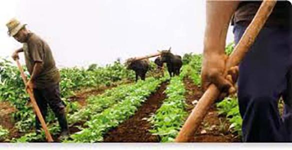 cuban agriculture 3